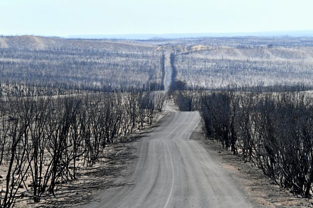 Bränderna har ödelagt Flinders Chase National Park på Kangaroo Island i Australien.