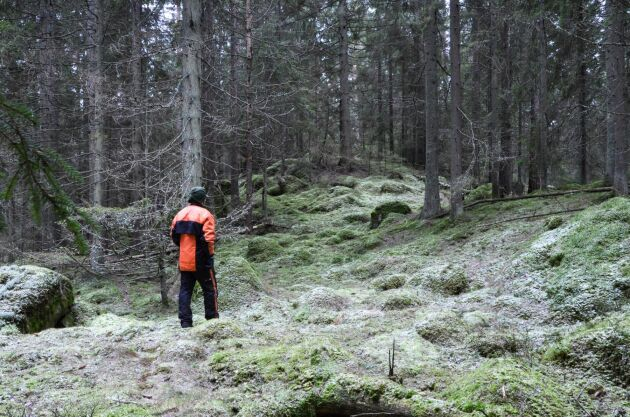De som utbildar sig till skogsmästare och jägmästare kan enligt rapporten se fram emot en bra arbetsmarknad med mycket låg arbetslöshet.
