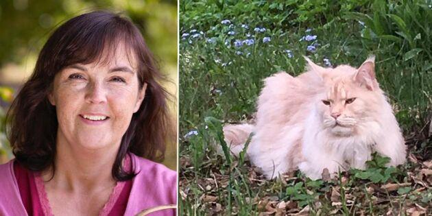 Krönika: Katten också, inte vore man som folk utan djur!
