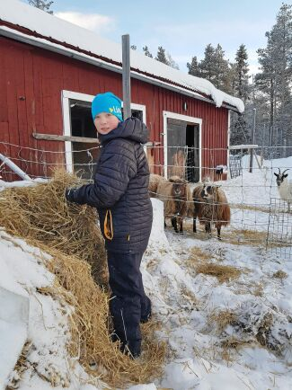 Sonen Melvin gillar att hjälpa till med gårdens getter och får.