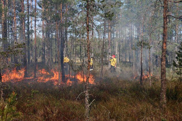 Sammanlagt ska 14 länsstyrelser över hela landet genomföra runt 120 naturvårdsbränningar under projektperioden 2014–2019.