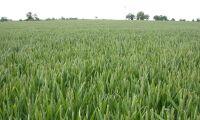 Svag prisutveckling för jordbruksprodukter