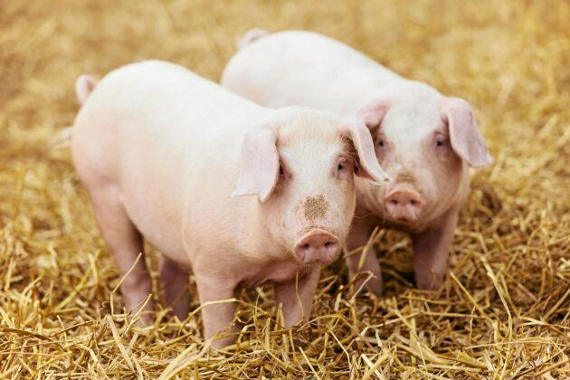 Djur som mår bra behöver inte behandlas med antibiotika.