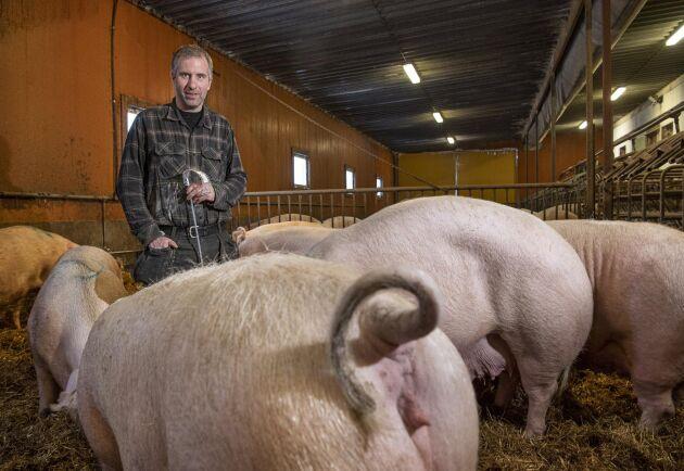 Fredrik Lindh driver Klontbäckens grisgård i Södra Åbyn utanför Burträsk och producerar årligen ca 5 100 slaktgrisar. Fredrik Lindh, som håller i en tom seminkatet för engångsbruk, har nyligen seminerat suggorna.