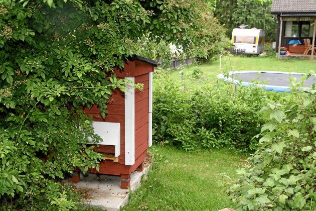 Bina flyger ut framåt. Bara 10 meter bakom hoppar grannarnas barn på studsmattan utan att se ett enda bi.