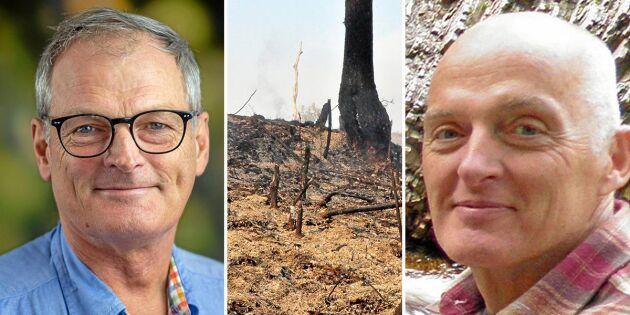 """""""Internationellt samarbete behövs för hållbart skogsbruk"""""""