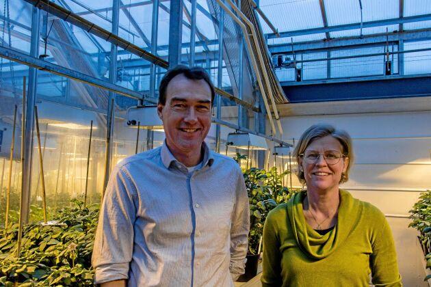 Mariette Andersson och Per Hofvander på SLU:s institution för växtförädling.