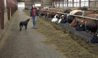Danska bönder omfamnar eko-boom