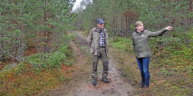 Här samsas vilt med skogsbruk
