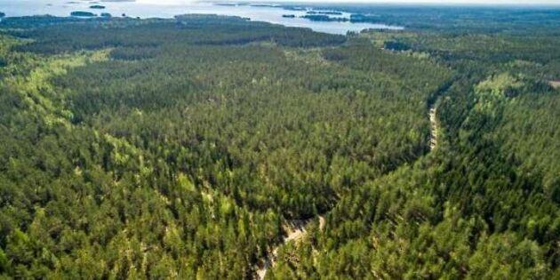 Gigantisk skogsaffär klar – fastighet såld för kvarts miljard