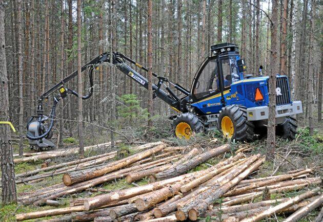 För hårda gallringar ökar risken för skogsskador, och försämrar därmed ekonomin. Dessutom tas inte produktionsförmågan till vara samtidigt som andelen massaved ökar. (Arkivbild)