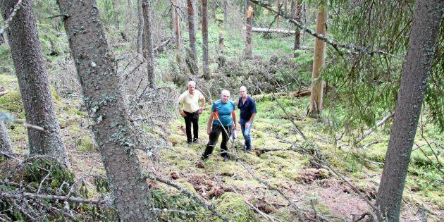 Angrepp av barkborre i biotopskydd oroar markägare