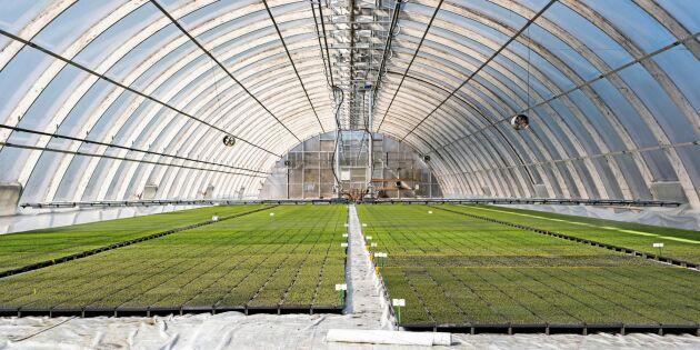Sex miljoner plantor i ett och samma växthus