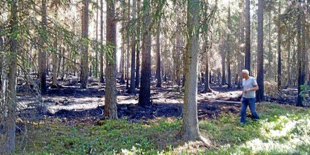 Stor oro hos skogsägare efter anlagda bränderna