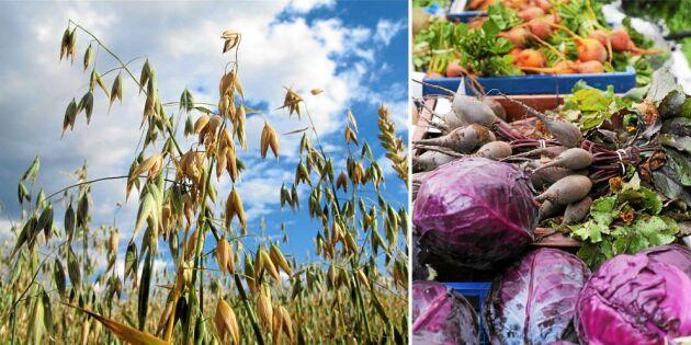 Fler handlar direkt av bonden – nu får Rekoringar statligt stöd