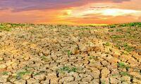 Särskild klimathänsyn till jordbruket – annars hotar världssvält