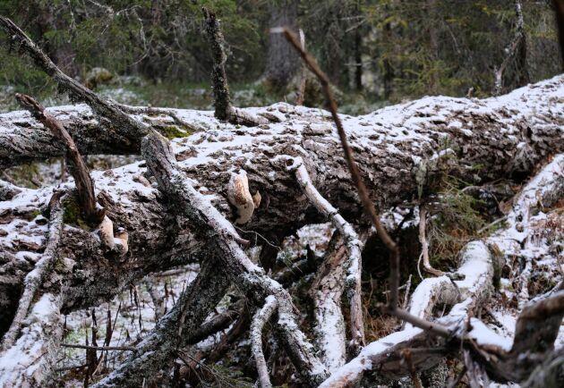 Nyckelbiotoper kommer att vara fortsatt i fokus under 2019, spår Land Skogsbruks reporter Mats Ostelius.