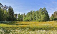 Blandad skog har färre skadeinsekter