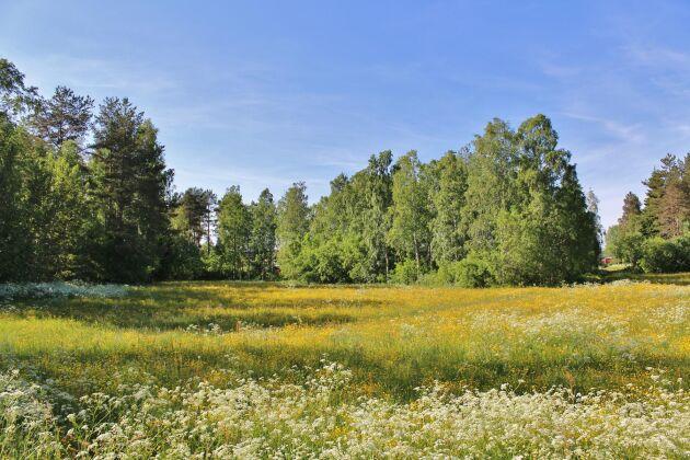 Skogar med få trädarter riskerar fler insektsangrepp, enligt ny forskning.