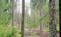 Mer pengar till skogsforskning