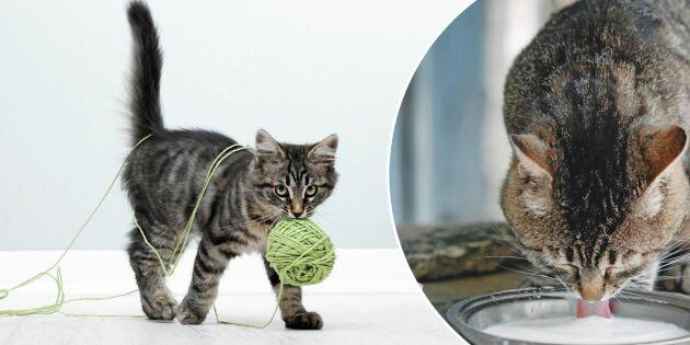 10 saker du trodde att du visste om din katt