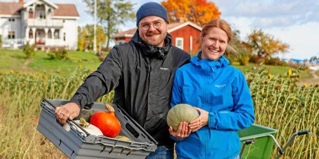 Magnus och Amanda gör succé med sitt andelsjordbruk!