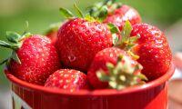 Dalande jordgubbspriser efter sabotage