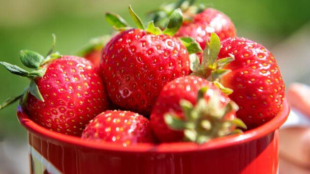En livsmedelskedja i Nya Zeeland drar in australiska jordgubbar sedan en synål hittats instucken i ett parti.