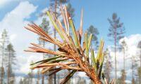 Nytt webbverktyg avslöjar skador i skogen