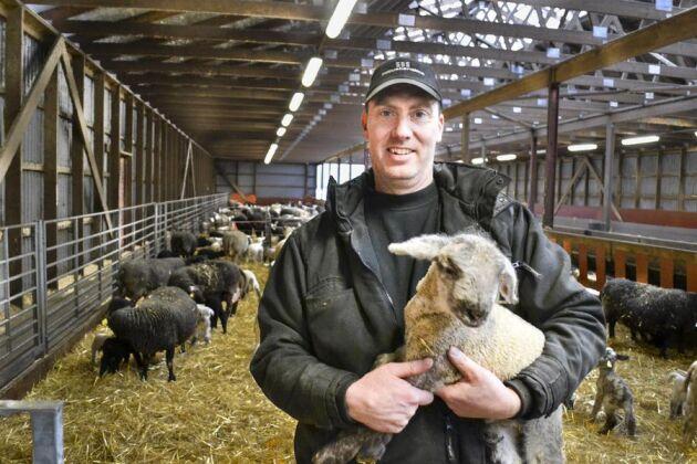 Tomas Olsson med ett lamm som förmodligen hamnade på tallriken redan i våras.