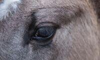 """""""Du köper en häst på postorder– det kan komma vad som helst"""""""