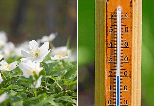 Södra Sverige har inte fått någon meteorologisk vinter i år.