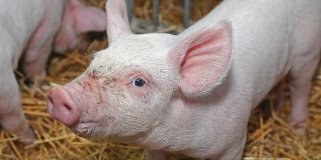 Storbritannien kapar användning av antibiotika