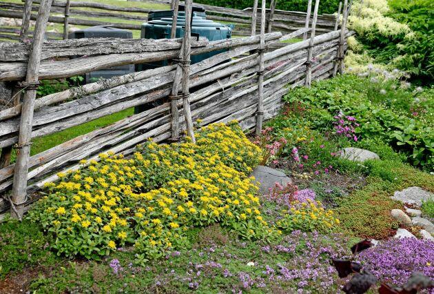 Vid gärdsgårdsstaket står komposterna men det enda man ser är mattan av sedum, timjan och backnejlika.