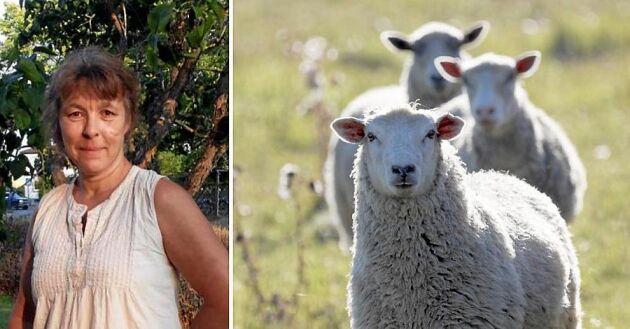Elva lamm och två tackor har stulits från småbrukaren Maria Brunér sedan i maj.