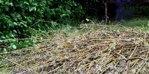 Ge växterna något att klänga på – fläta ett eget klätterstöd