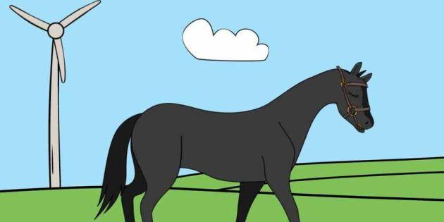 Gnägg! Allt du behöver veta om hästen – på under en minut