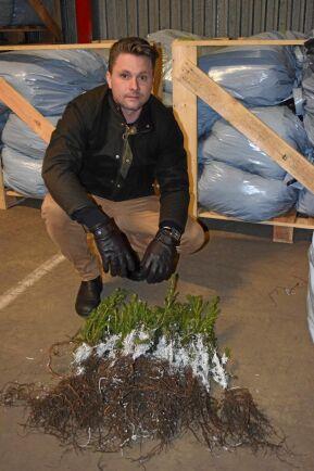 Halländska Nordic Plant Center odlar granplantor på 20 hektar i Skogaby utanför Laholm. I år har upptagningen av plantor försenats två-tre veckor till följd av vätan och väntas inte komma i gång förrän i april.