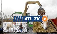 ATL TV: Många söker tackpeng