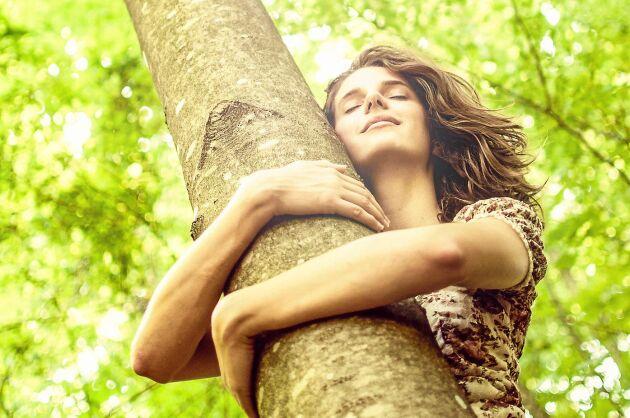Krama om ett träd och känn dess majestätiska lugn.