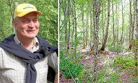 Forskaren: Bra att blanda trädslag