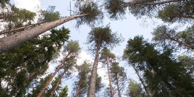 Universitet satsar på ny utbildning för skogsbruket