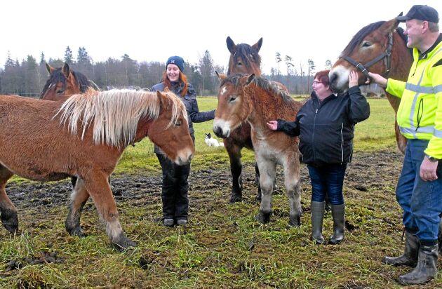Emma, Ann-Helén och Alf Magnusson trivs med sina ardennerhästarna.