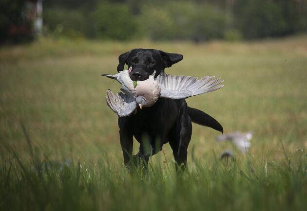 Det finns en rad olika jakthundsutbildningar både i privat regi och genom olika organisationer.