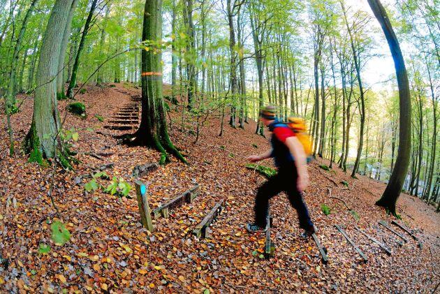 Delar av Skåneleden är brantare än väntat. Här går den uppför en ås i Söderåsens nationalpark. De flesta längre leder i Sverige har orange markeringar.