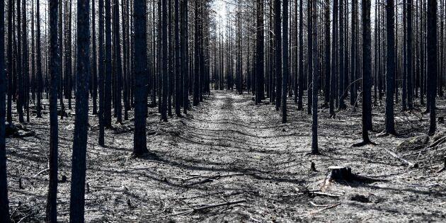Skogsbrända områden tillgängliga igen