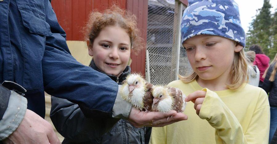 Mattias Stafströms duvor är bara två veckor gamla. Dunya Adegüzel och Melker Stoltz fascineras av de nya liven.