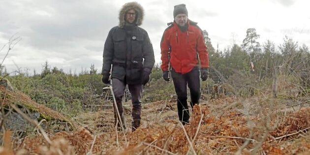 Svensk skogsfilm prisad i Cannes