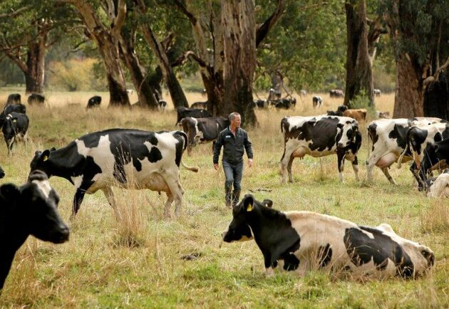 Stuart Crosthwaite är femte generationens mjölkbonde och Mountain Milk-kooperativets styrelseordförande.