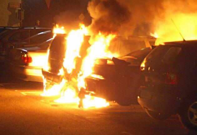 Den anlagda bilbranden utanför Falkenberg riktades mot en minkuppfödare som under två års tid har terroriserats av militanta djurrättsaktivister. Bilden är tagen vid ett annat tillfälle.